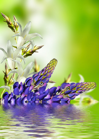 bluebells: floral background of delicate flowers bluebells. lupine Stock Photo