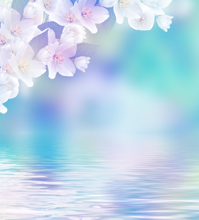 Spring landscape with delicate jasmine flowers