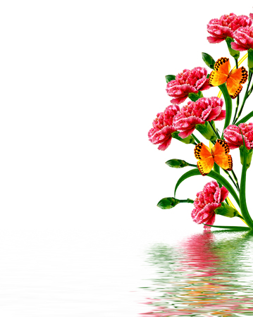 cadre: Bouquet of flowers carnation. Flowers isolated on white background.