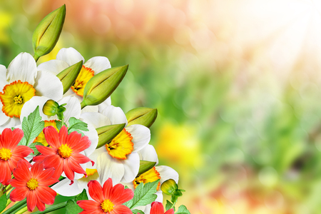 Spring landscape beautiful spring flowers daffodils yellow stock spring landscape beautiful spring flowers daffodils yellow flowers dahlia stock photo 58593970 mightylinksfo