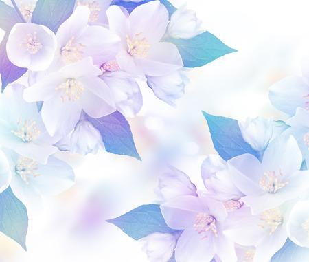 considerable: flowers jasmine
