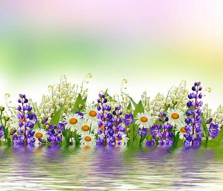 야생화와 여름 풍경입니다. 푸른 꽃 루팡 및 흰색 데이지. 스톡 콘텐츠