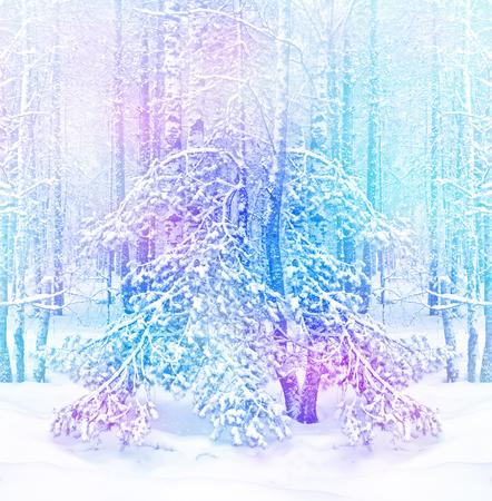 bosque. paisaje de invierno. Árboles nevados