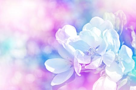 vernal: landscape. Flowering apple tree. Spring garden. flower