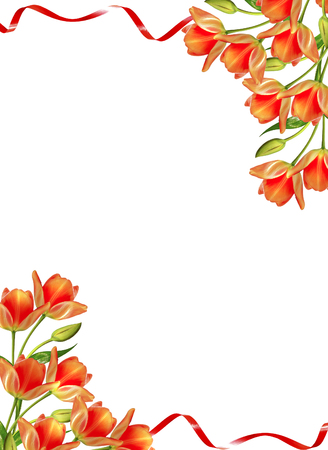 spring flowers tulips isolated on white background