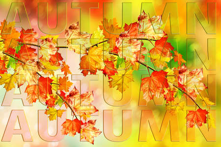 indian summer: Autumn foliage. Colorful leaves. Indian summer. text, letters