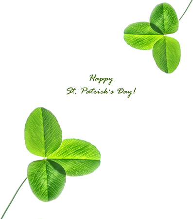 leafed: Green clover leaves on a background summer landscape. St.Patrick s Day