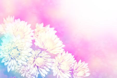 Colorful beautiful autumn chrysanthemum flowers. floral background Archivio Fotografico