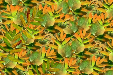 indian summer: abstract autumn background bright colorful foliage. Indian summer Stock Photo