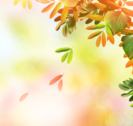 autumn landscape with colorful bright foliage. Indian summer. Stock Photo