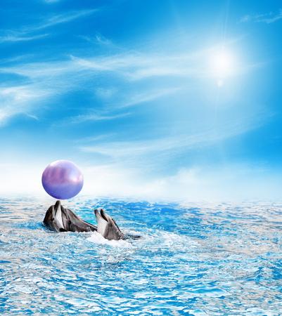 Fish dolphins swim in the blue sea