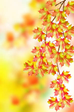 indian summer: autumn landscape with colorful bright trees. Indian summer