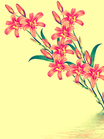 path to romance: Delicate Flower lily isolated on yellow background.