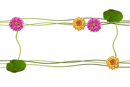 path to romance: Autumn flowers zinnias isolated on white background