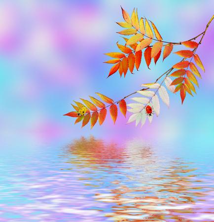 sorb: Autumn landscape. Beautiful  leaves. Colorful trees. foliage