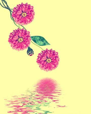 path to romance: Autumn flowers zinnias isolated on yellow  background