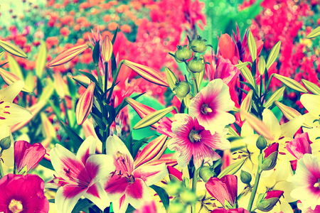 considerable: Summer landscape. colorful bright flowers lilies and mallow