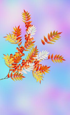 pit fall: Autumn landscape. Beautiful  leaves. Colorful trees. foliage