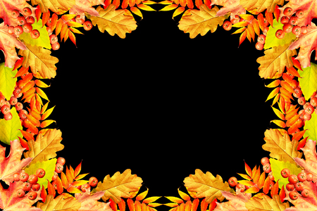 indian summer: Colorful autumn foliage isolated on black background. Indian summer.