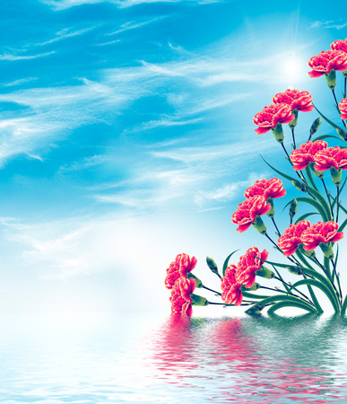 carnation flowers on a background of blue sky with clouds Stock Photo