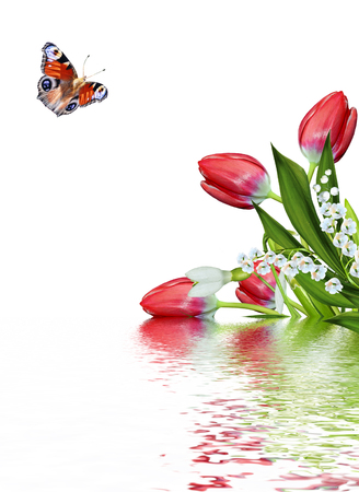 spring flowers tulips isolated on white background. snowdrop. butterfly Stock Photo