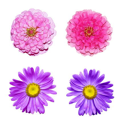 colorful bright flowers isolated on white background Stock Photo