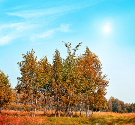 indian summer: Autumn landscape. Beautiful  leaves. Colorful trees. Indian summer Stock Photo