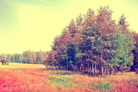 indian summer: Autumn landscape. leaves. Colorful trees. Indian summer