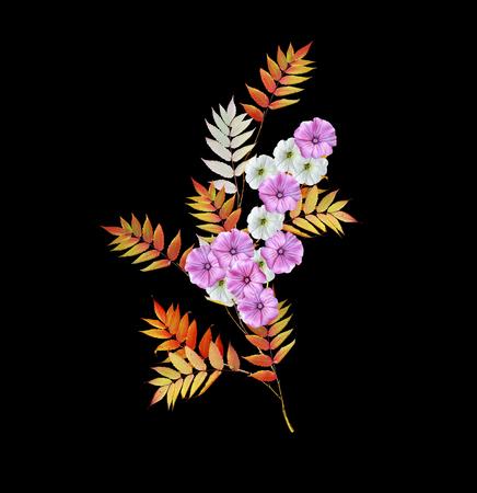 Autumn colorful morning glory flowers isolated on black background. rowan