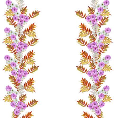 petunia wild: Autumn colorful morning glory flowers isolated on white background. rowan