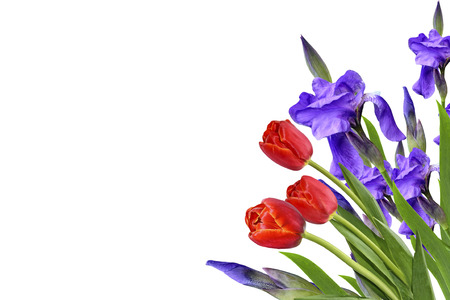 hand bell: spring flowers  iris isolated on white background. tulip Stock Photo