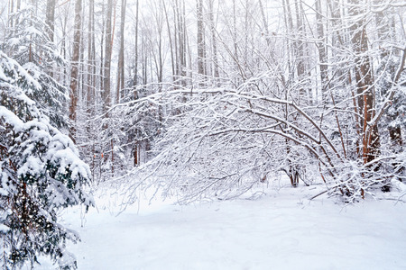 forest in the frost. Winter landscape. Snow covered trees.