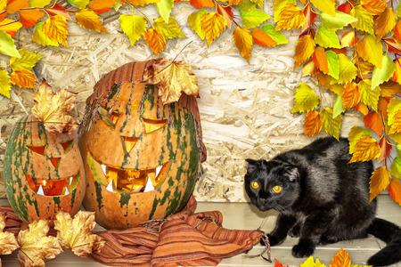 halloween black cat: Card Halloween. Black cat and orange pumpkin. Stock Photo