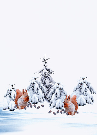 snow covered forest: Squirrel in winter snow covered forest. Christmas card. Stock Photo