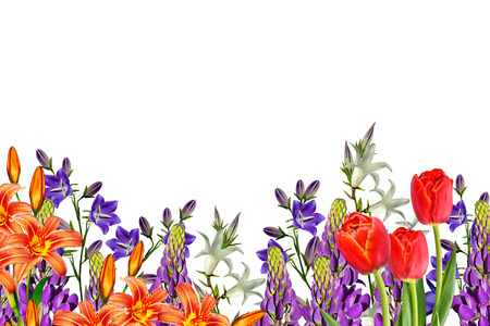 Flowers bells isolated on white background. lupine Stock Photo