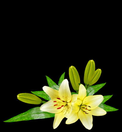 path to romance: Flower lily isolated on black background. summer