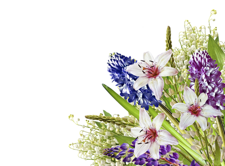 lupines colored flowers on a white background Stock Photo