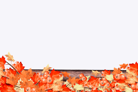 indian summer: abstract background of autumn leaves. Indian summer