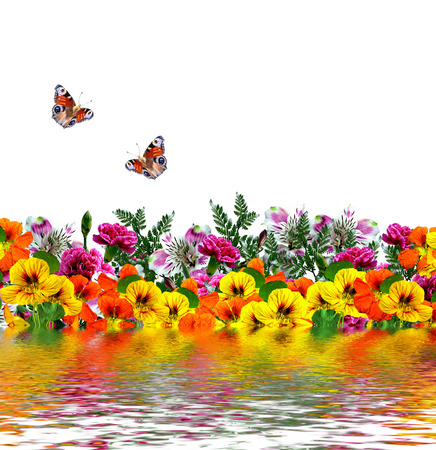 path to romance: flowers isolated on white background. butterfly. summer