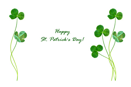 leafed: green clover leaves isolated on white background. St.Patrick s Day