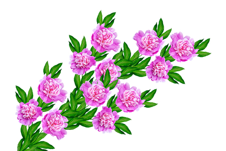 Colorful bright flowers peonies isolated on white background.