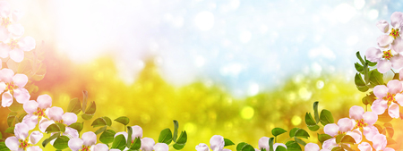 vernal: Blossoming branch apple. Bright colorful spring flowers Stock Photo