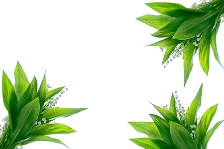 The branch of lilies of the valley flowers isolated on white background. Convallaria Majalis Stock Photo