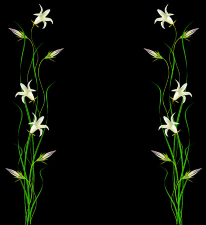 Colorful spring flowers campanula isolated on a black background.