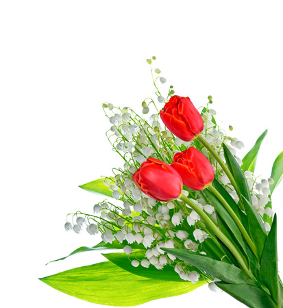 spring flowers tulips isolated on white background. Stock Photo