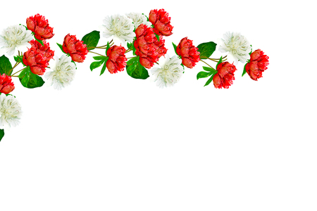 path to romance: Colorful bright flowers peonies isolated on white background.