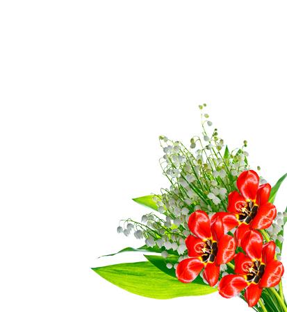 spring flowers tulips isolated on white background. Stock Photo