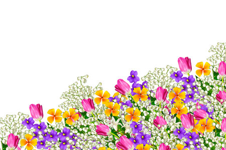 Colorful spring flowers isolated on white background. Stock Photo