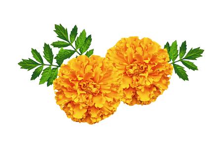 heldere kleurrijke bloemen goudsbloemen geïsoleerd op een witte achtergrond