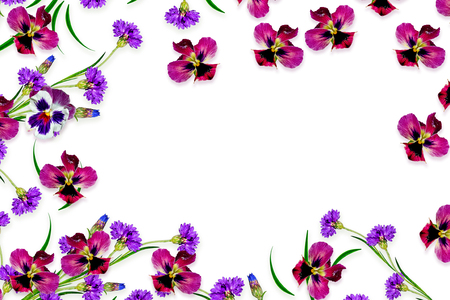 path to romance: daisies summer flower isolated on white background. pansy Stock Photo